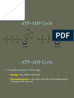 4.1 ATP-ADP Cycle