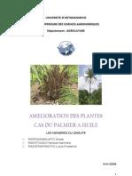 Amélioration du palmier à huile