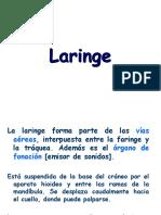 LaRinge veterinaria