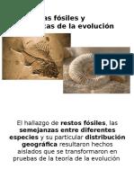 Microclase Evidencias Fosiles y Anatomicas de La Evolucion.pptx