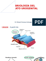 6 Urogenital