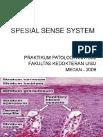 Spesial Sense System 01ppt