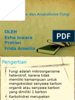 Katabolisme Dan Anabolisme Fungi