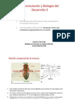 6 Control Genico Del Desarrollo en Drosophila