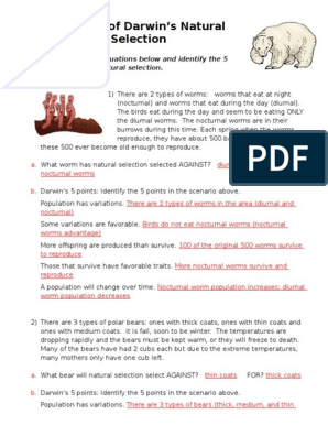 5 Points of Natural Selection - Answer Key (1) | Natural ...