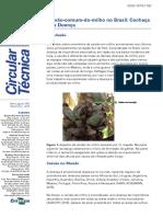 Carvão Comum Do Milho No Brasil_ Conheça Essa Doença. Circular Técnico da Embrapa
