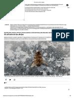 El calvario de las abejas.pdf