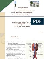 Anatomie Du Rein Externes 2016