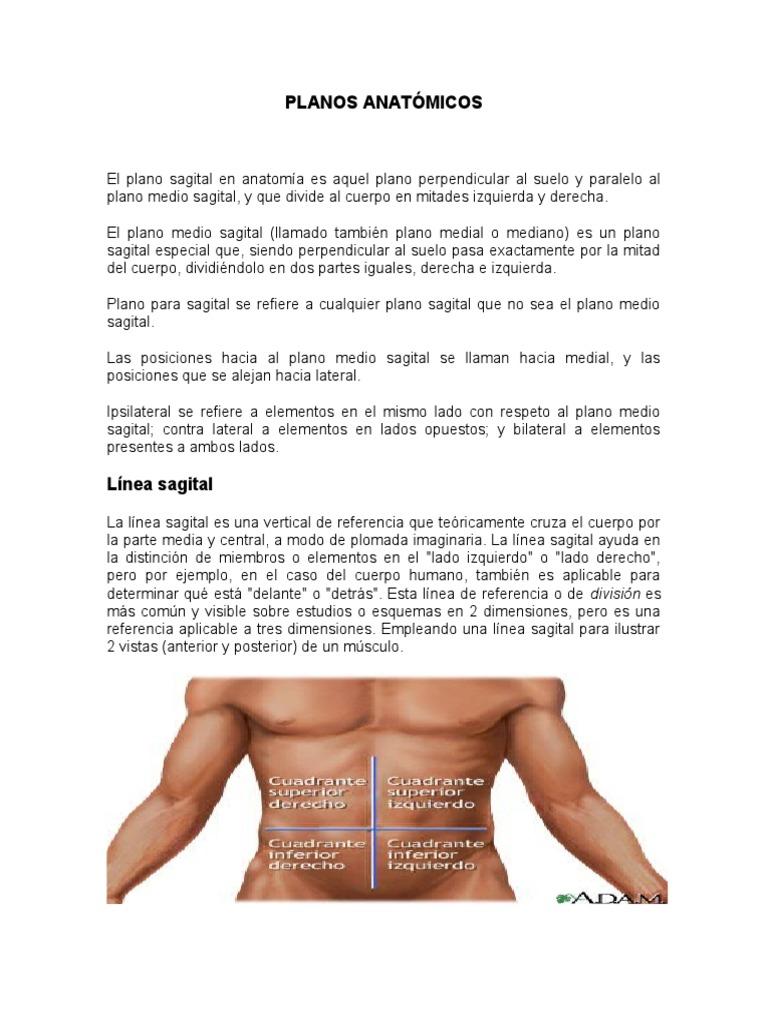 Excelente Partes Del Cuerpo Anatómicas Ideas - Imágenes de Anatomía ...