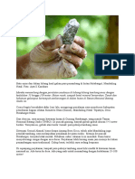 Batu Emas Dari Dalam Lubang Hasil Galian Para Penambang Di Hutan Hutabargot