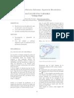 Proyecto Final - CUV(Fárez-Peñafiel) (2)