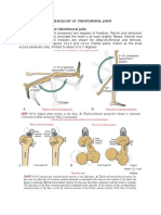 Kinesiology of Knee Joint