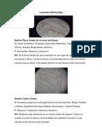 Histologa Album de Los 3 Parciales!!! (Laminillas)-1 (1)-1