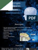 Meninges Craneales y Liquido Cerebroespinal