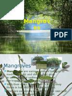 mangroves-130101054426-phpapp01