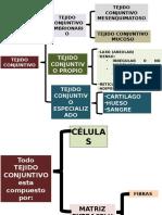 HISTOLOGIA 2017- Tejido Conectivo