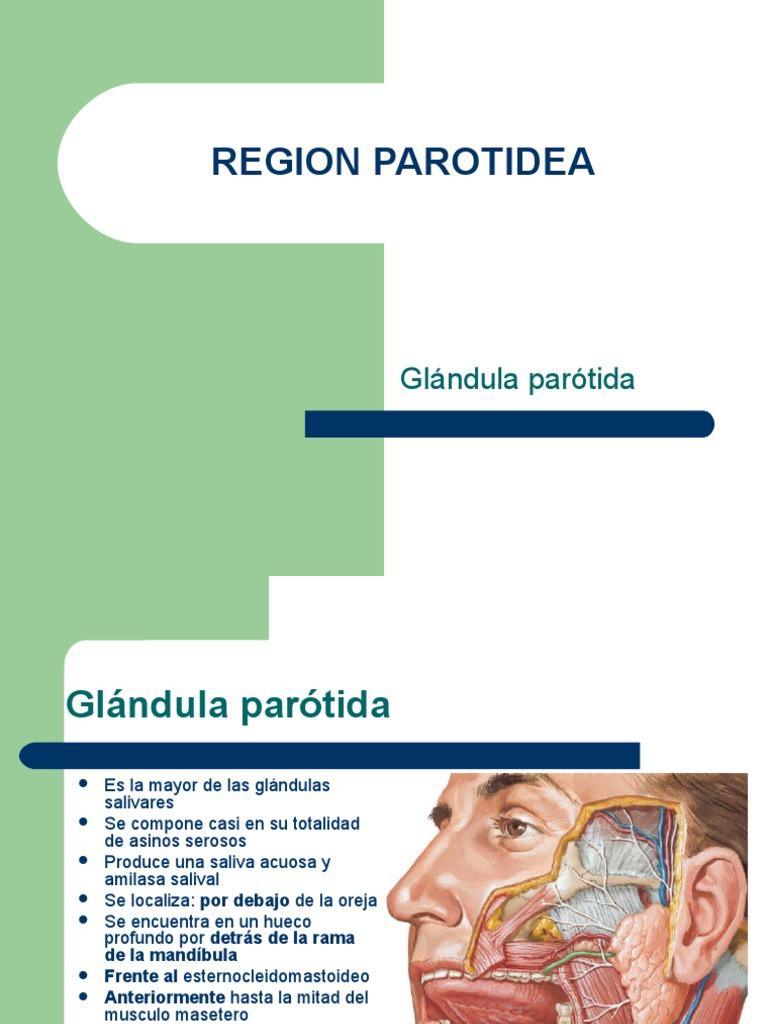 Glandula Parotida y Cuero Cabelludo