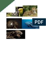 peligro de extincion en mexico.docx