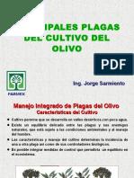 Plagas Del Olivo