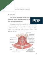 Anatomi Leher Dan KGB