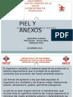 PIEL Y ANEXOS.pptx