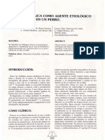 Capillaria Plica en Hematuria en Perros