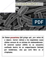 Célula procariota 2015