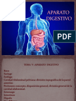 Anatomía Digestivo