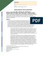 Drenaje Glinfático y Limpieza de metabolitos tóxicos en el cerebro