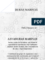 Levaduras Marinas Expo