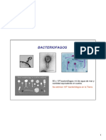 virus2.pdf