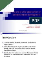 Embrio Ayam
