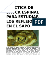 Práctica de Shock Espinal Para Estudiar Los Reflejos en El Sapo