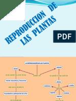 Reproduccion de Las Plantas