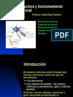 estructura y funcionamiento neuronal.pps