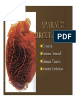 Microsoft PowerPoint - Aparato Circulatorio y Corazon