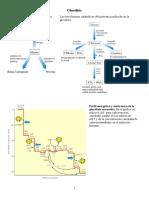 glucolisis2007.pdf