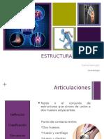 estructura articular
