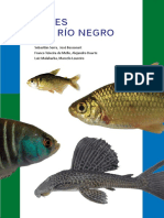 Amazonicos Catalogo Peces Rio Negro