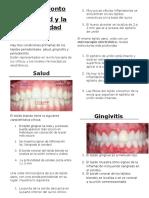 traduccion-periodonto