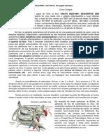 4.-GÂNGLIO-ESFENOPALATINO (1)
