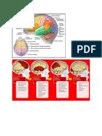 Procesos Cognitivos Sup e Inf