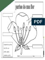 Partes de Una Flor Actividades