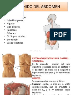 Estomago hipertonico e hipotonico