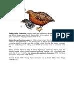 Burung Puyuh Jayawijaya Memiliki Nama Latin Anurophasis Monorthonyx