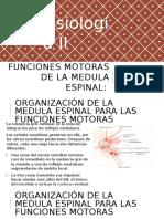 Funciones Motoras de La Medula Espinal