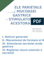 Celulele parietale (2)