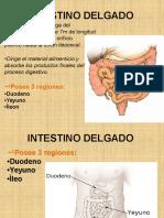 INTESTINO DELGADO.pptx