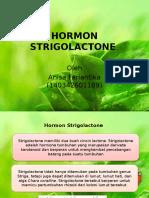 Hormon Strigolactone