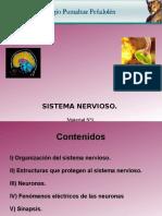 BIO3MUNI1N1PEN. Sistema Nervioso, Material Uno.